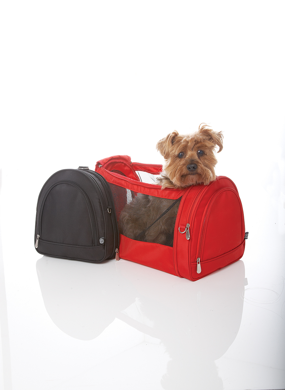 Photography - Dog in Doggy Bag